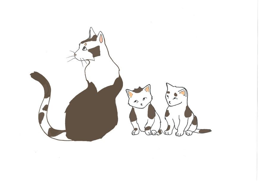 Chats-3